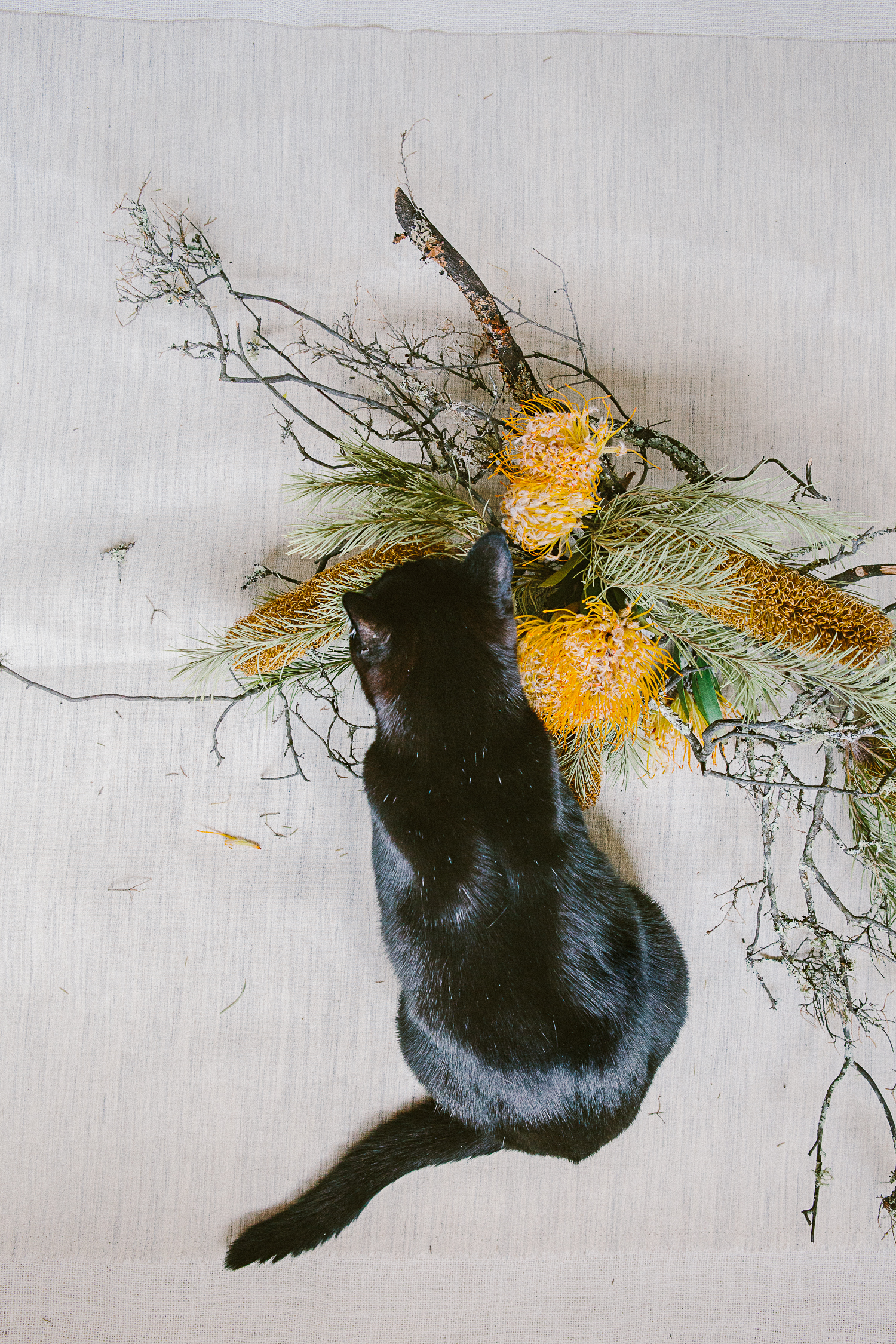 twoguineapigs_photography_ruby_slippers_cat_and_floral_series_1500-4.jpg