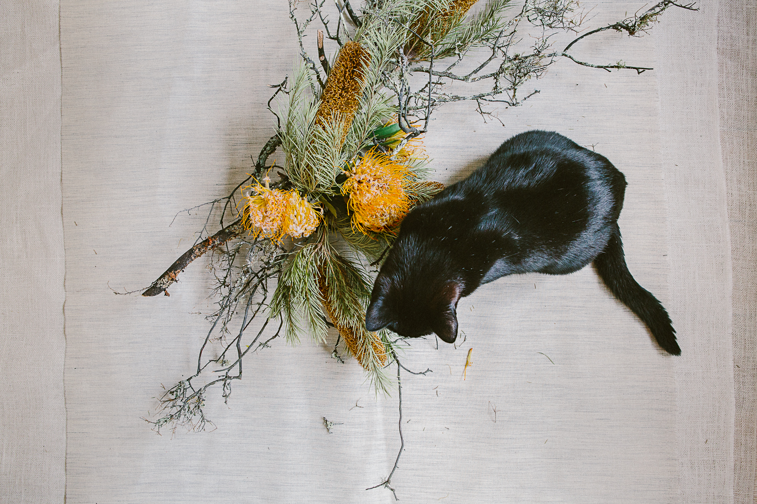 twoguineapigs_photography_ruby_slippers_cat_and_floral_series_1500-5.jpg