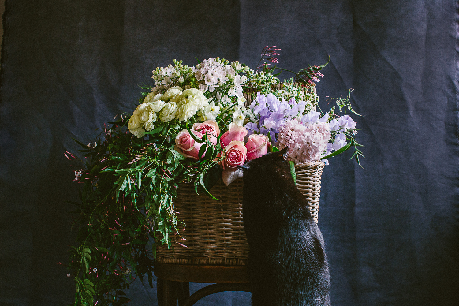 twoguineapigs_photography_ruby_slippers_cat_and_floral_series_1500-20.jpg