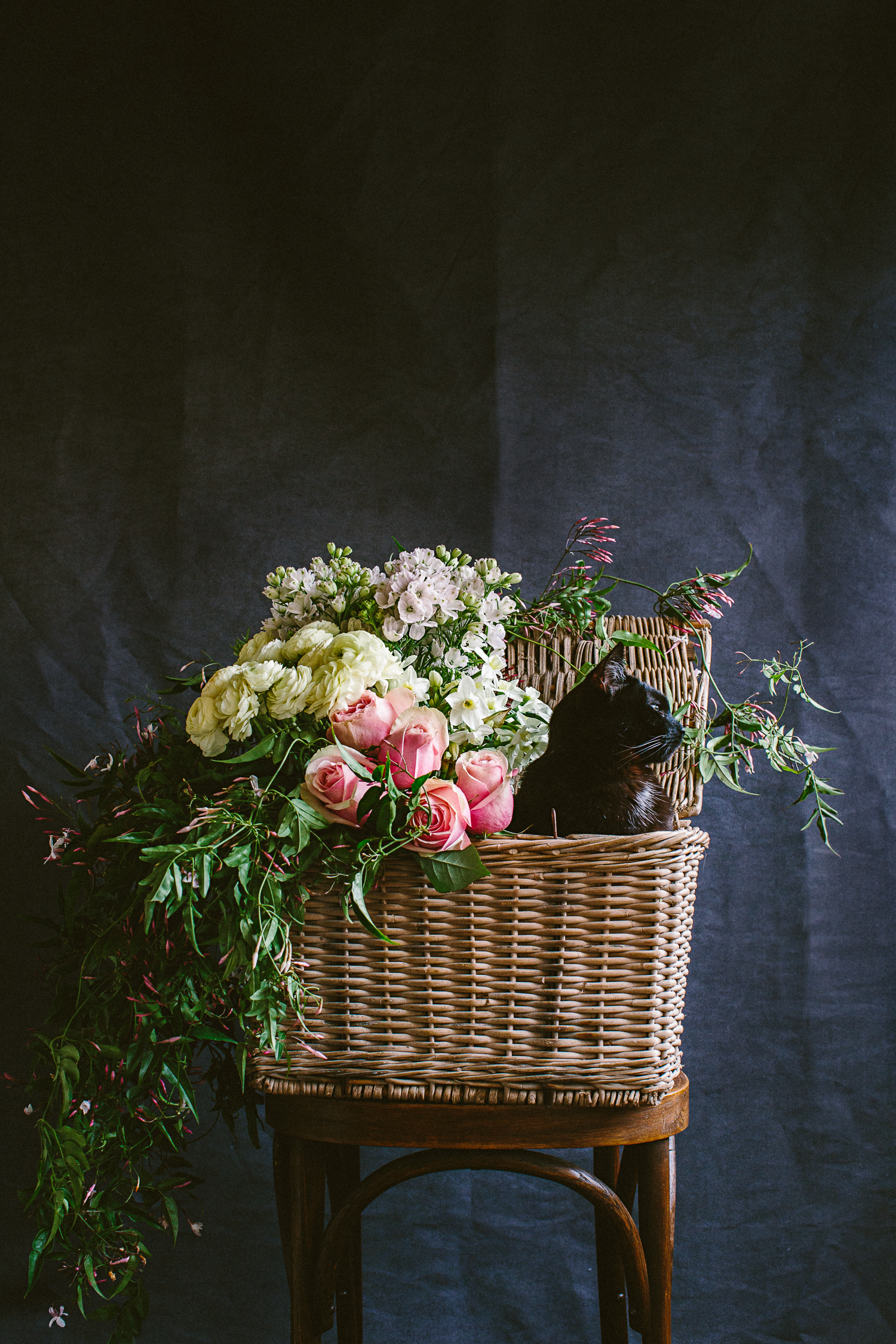 twoguineapigs_photography_ruby_slippers_cat_and_floral_series_1500-19.jpg
