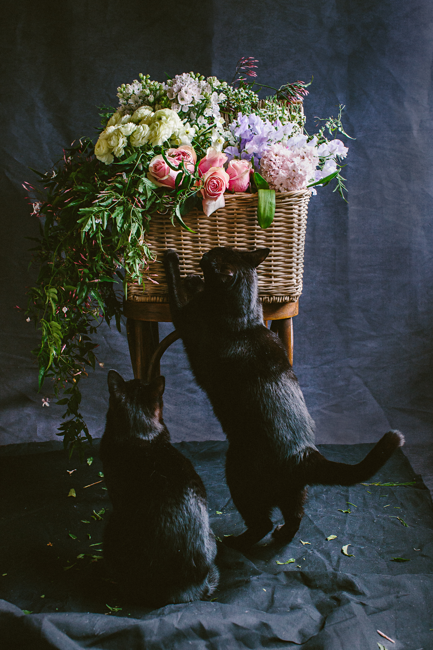 twoguineapigs_photography_ruby_slippers_cat_and_floral_series_1500-22.jpg