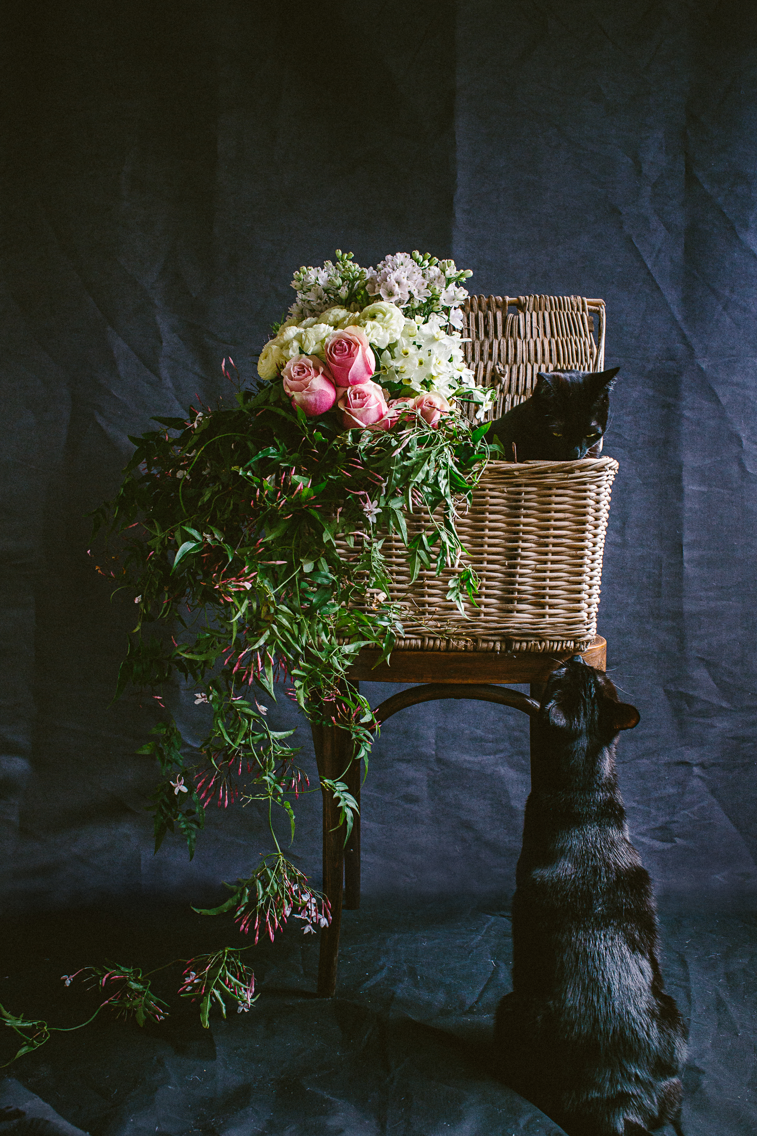 twoguineapigs_photography_ruby_slippers_cat_and_floral_series_1500-12.jpg