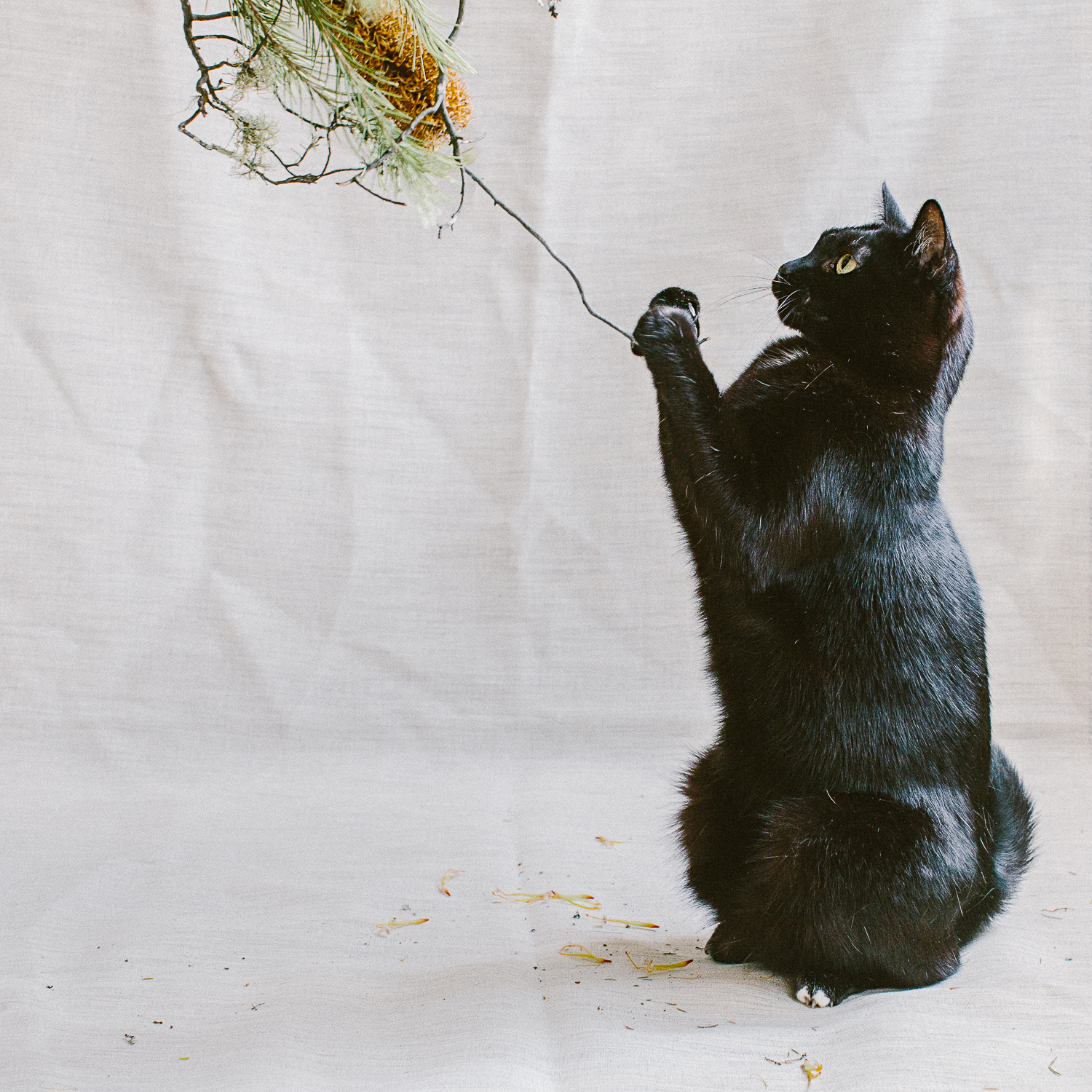 twoguineapigs_photography_ruby_slippers_cat_and_floral_series_1500-9.jpg