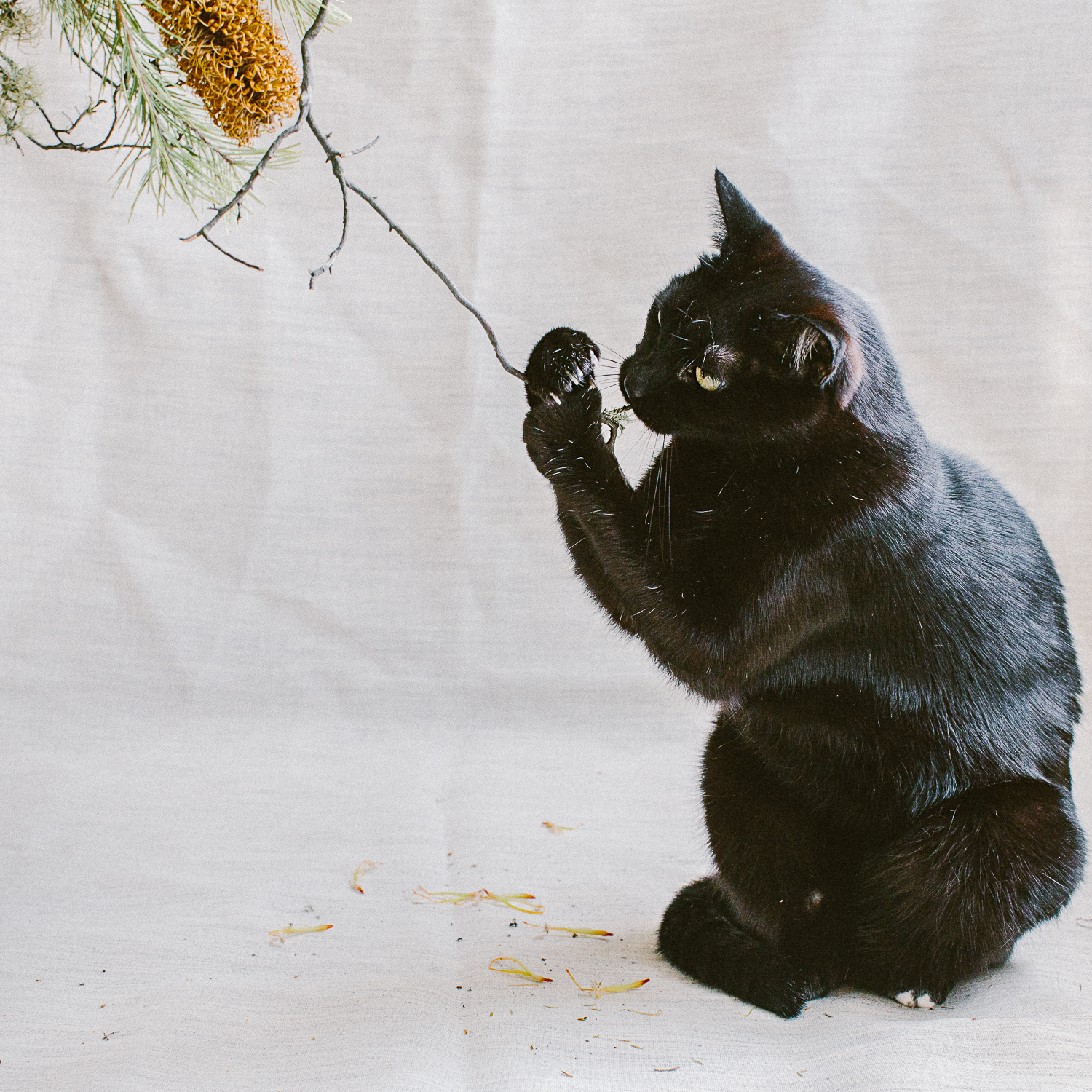 twoguineapigs_photography_ruby_slippers_cat_and_floral_series_1500-8.jpg