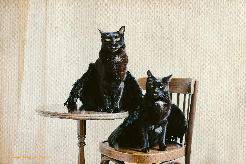 twoguineapigs_pet_photography_halloween_black_cats_1500-1.jpg
