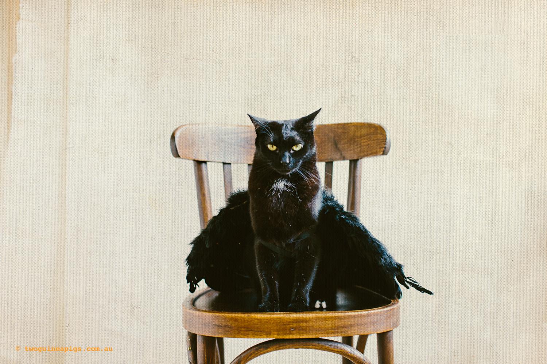 twoguineapigs_pet_photography_halloween_black_cats_1500-4.jpg