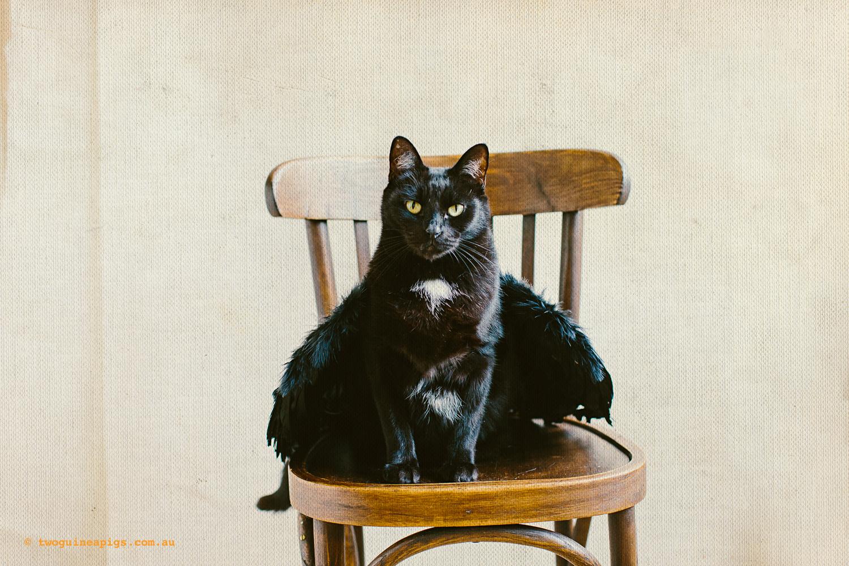 twoguineapigs_pet_photography_halloween_black_cats_1500-3.jpg