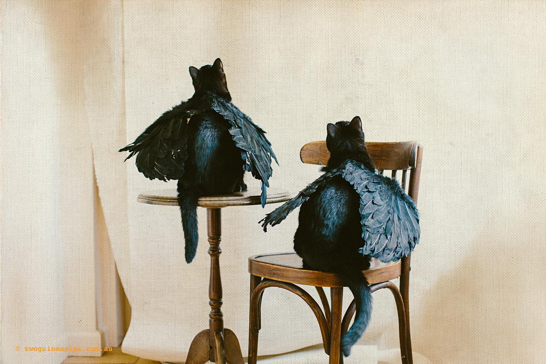twoguineapigs_pet_photography_halloween_black_cats_1500-6.jpg