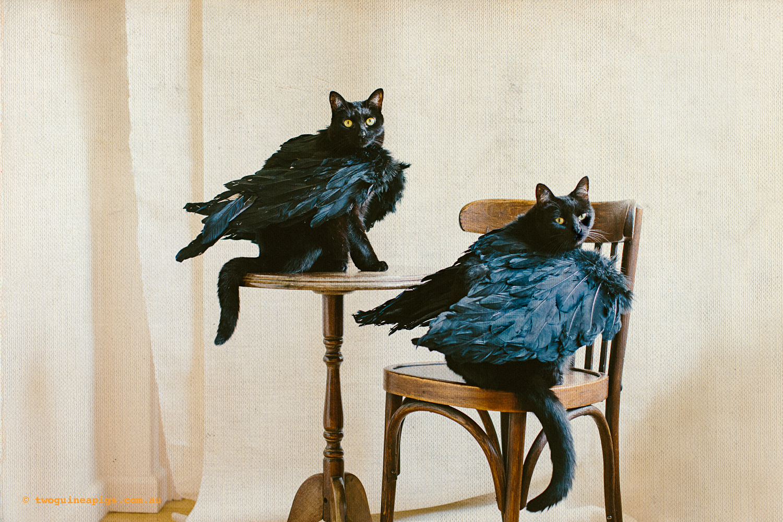 twoguineapigs_pet_photography_halloween_black_cats_1500-7.jpg