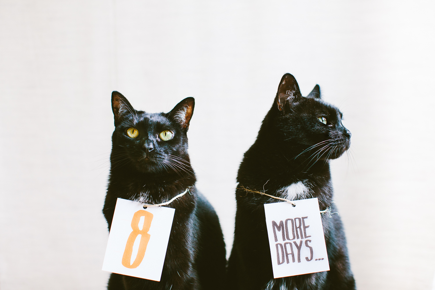 twoguineapigs_pet_photography_black_cats_future_perfect_magazine_issue2_countdown_collaboration