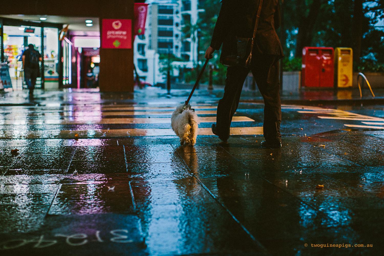 twoguineapigs_jkblackwell_summer_rain_potts_point_kings_cross_1500-8.jpg