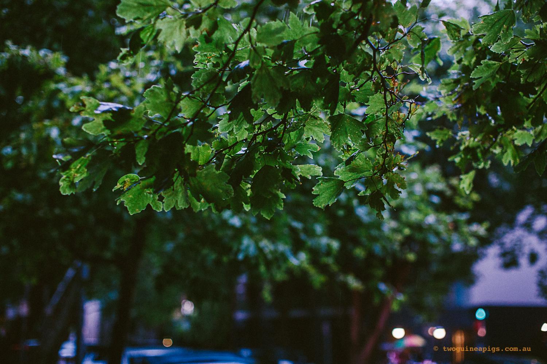 twoguineapigs_jkblackwell_summer_rain_potts_point_kings_cross_1500-13.jpg