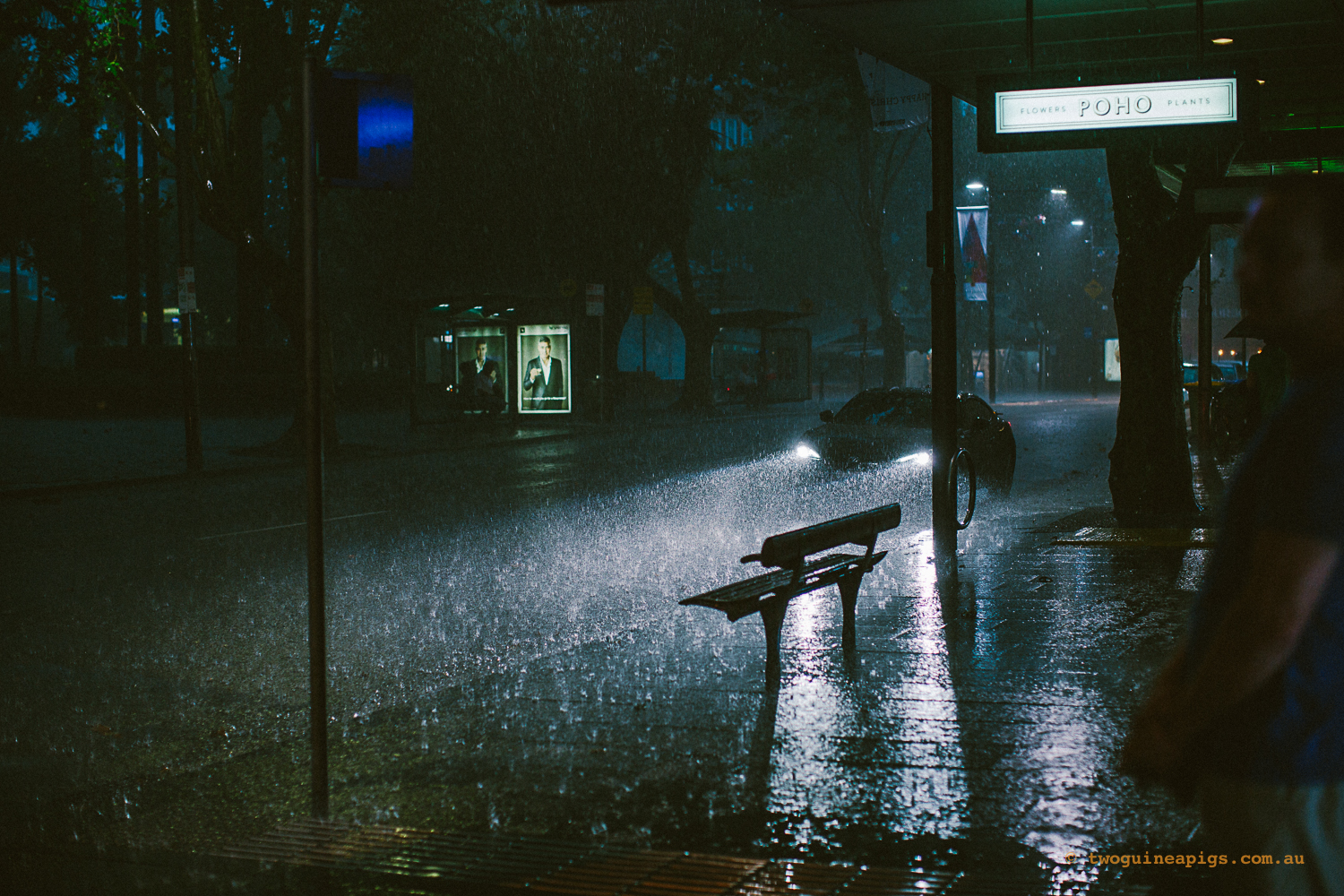 twoguineapigs_pet_photography_summer_storm_kings_cross_potts_point_rain