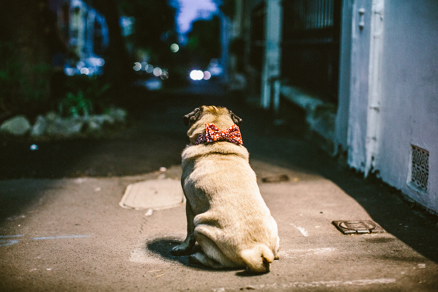 44_twoguineapigs_pet_photography_ohjaffa_vday_bowtie_collection_2015_1500.jpg