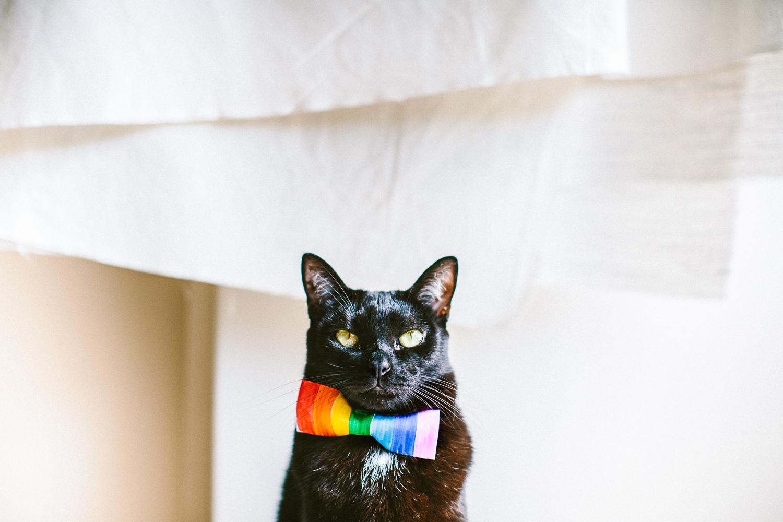 twoguineapigs_pet_photography_mardi_gras_rainbow_pussy_black_cats_bombay_cats_kingscross_pottspoint