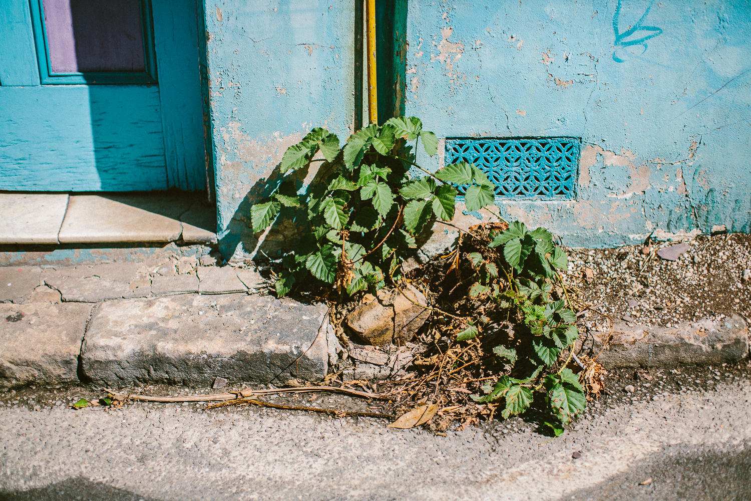 jkblackwell_twoguineapigs_darlinghurst_autumn_backstreets_streetscapes_urbanscapes_1500-03.jpg