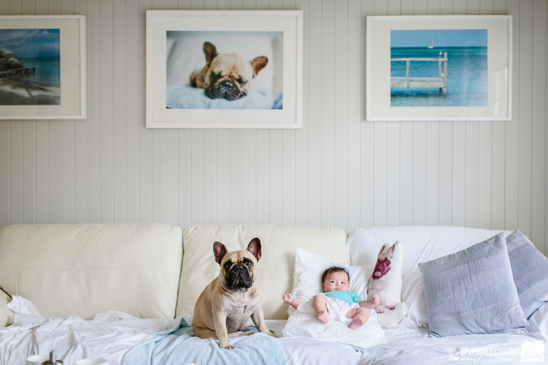 twoguineapigs_pet_photography_pom_pom_french_bulldog_ms_jayagillies_dog_photography_newborn