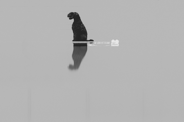 twoguineapigs_pet_photography_douglas_kerry_blue_terrier