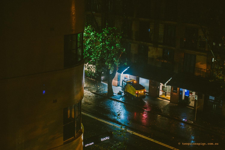 twoguineapgs_pet_photography_autumn_sydney_storm_potts_point