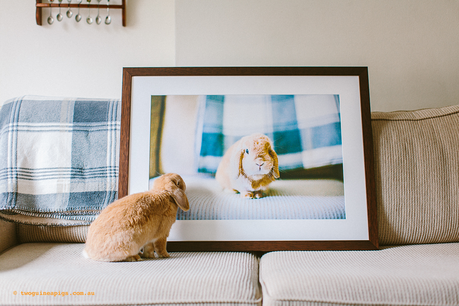 """M"" 16x24"" - Waffles the Lop Eared Bunny -  his story here ."