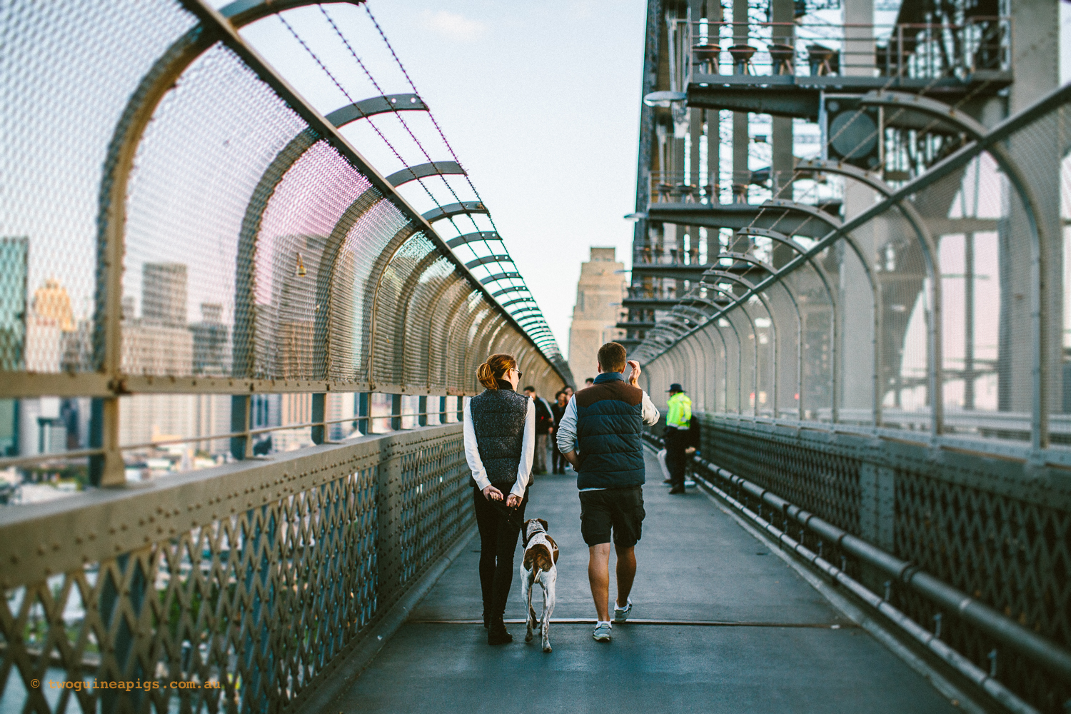 twoguineapigs_pet_photography_sydney_harbour_bridge_walk_pooches_street_photography_urbanscapes