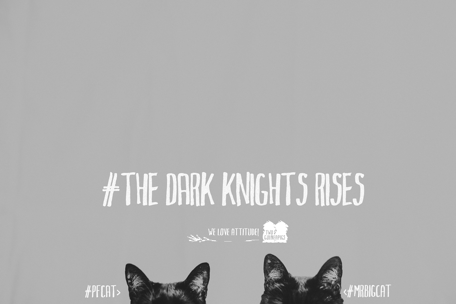 twoguineapigs_pet_photography_black_cats_dark_knights_rising_animals