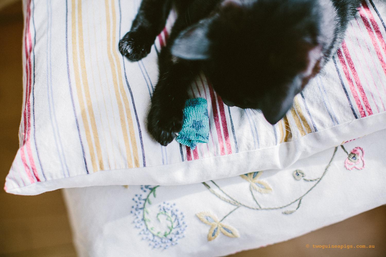 twoguineapigs_pet_photography_black_cats_pf_vet_going_hero