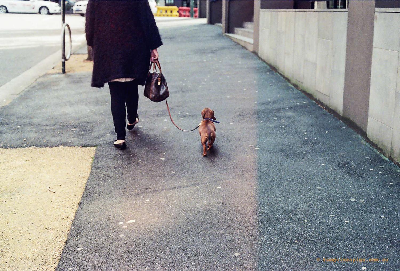 twoguineapigs_pet_photography_street_dog_sausage_film_kodak_portra_800-3