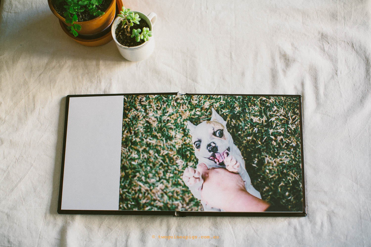 twoguineapigs_pet_photography_stella_french_bulldog_fine_art_album_san_souci_1500-7.jpg