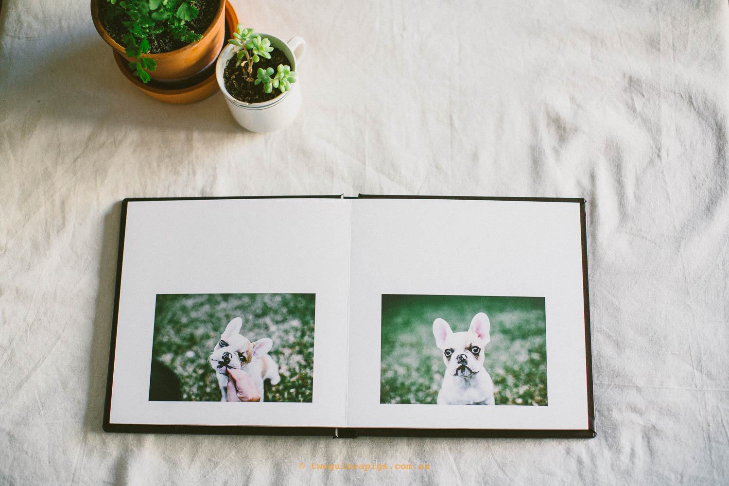 twoguineapigs_pet_photography_fine_art_album_visual_storyteller_stella_french_bulldog_sans_souci
