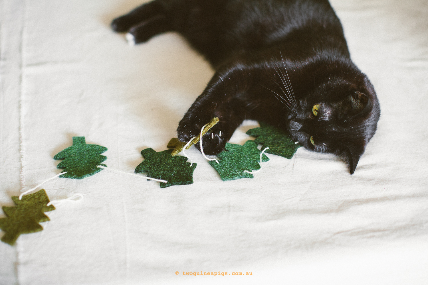 twoguineapigs_pet_photography_blackcats_pf_behind-the-scenes_christmas_madness