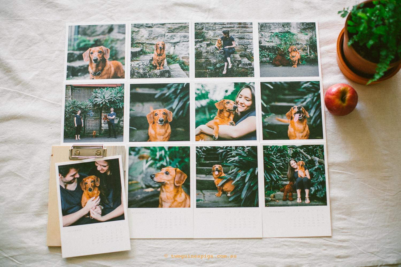 twoguineapigs_pet_photography_riley_sausage_dog_cross_artifact_uprising_wood_calendar_christmas