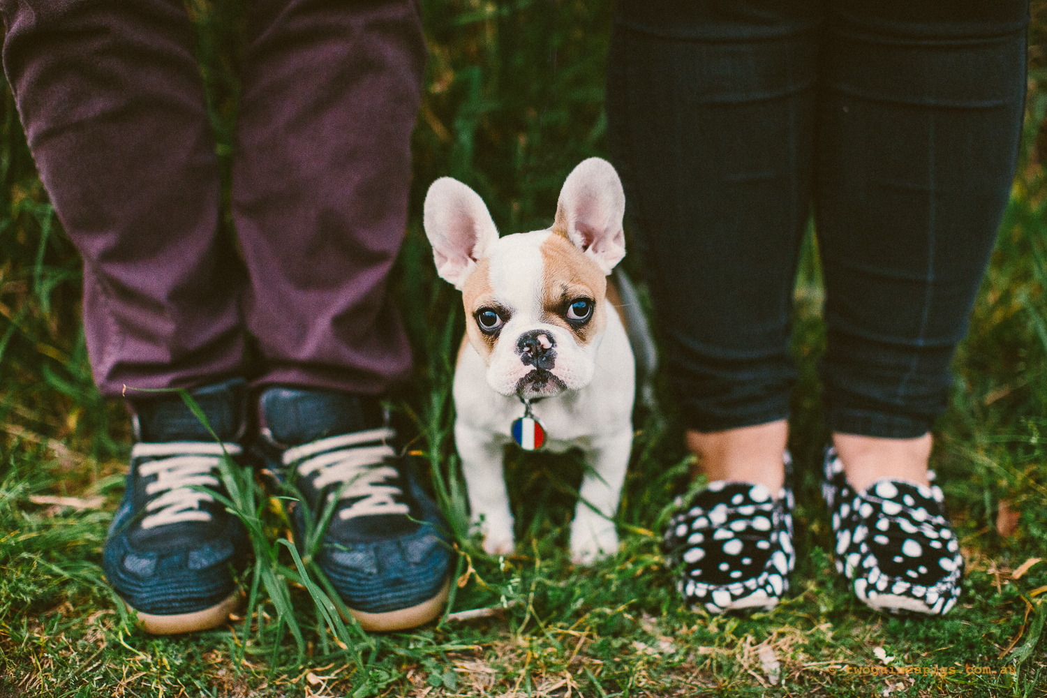 twoguineapigs_pet_photography_stella_french_bulldog_sans_souci_beancaa_chan