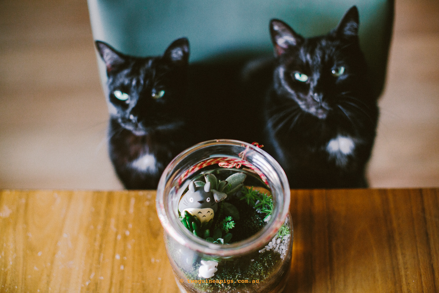 twoguineapigs_pet_photography_blackcts_mrbig_pf_terrarium_totoro