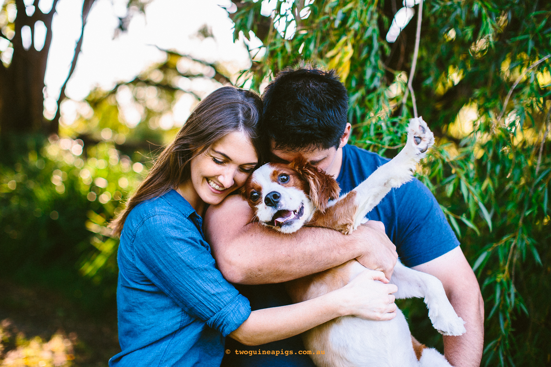 twoguineapigs_pet_photography_loki_beagle_cross_kings_charles_pets_and_people_dog_animal