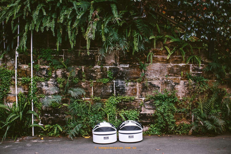 twoguineapigs_pet_photography_sleepypod_black_cats_travel_wendys_secret_garden