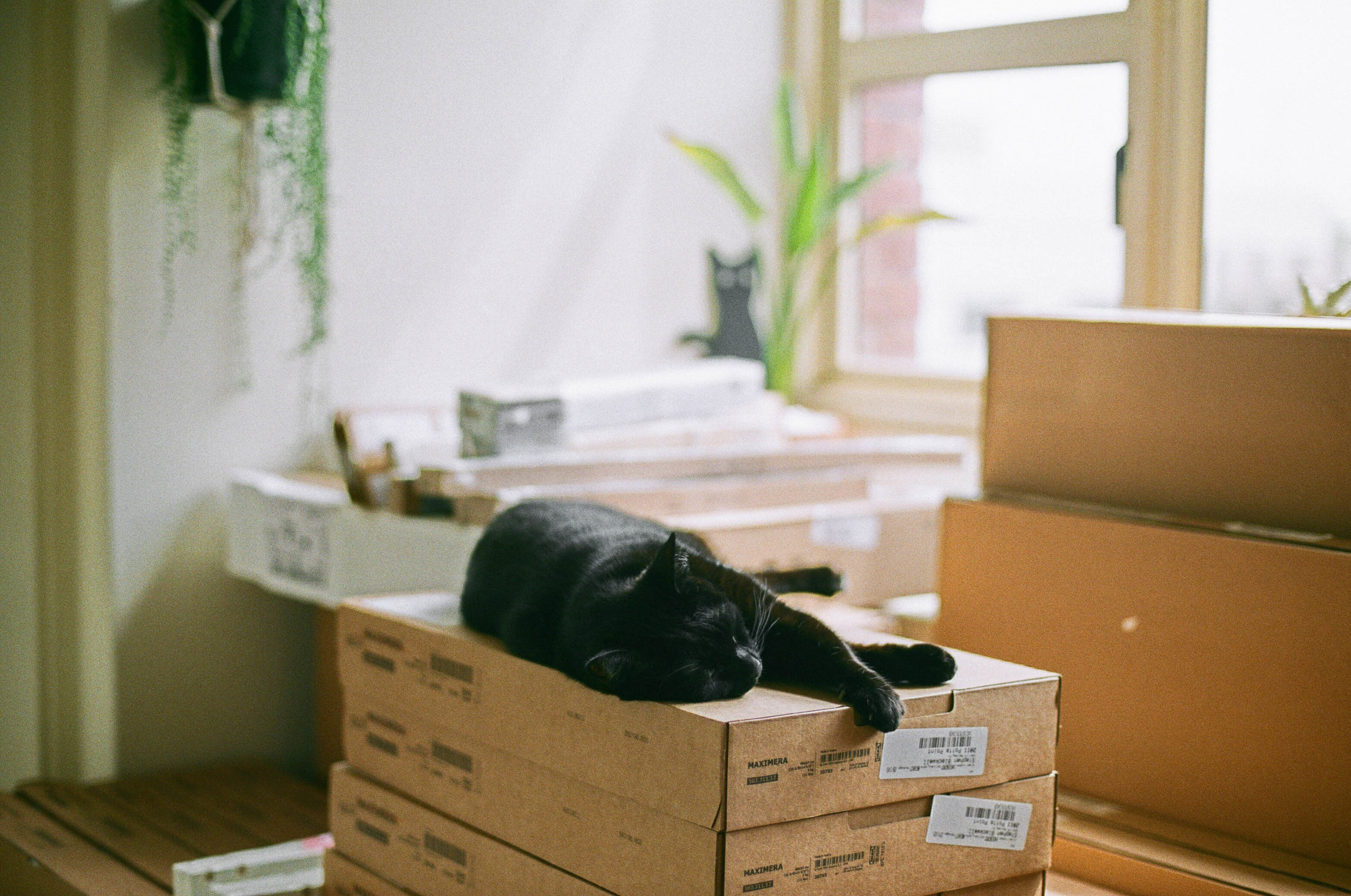 © jkblackwell_twoguineapigs_blackcats_scallywags_kitchen_fujibilmc200_canonae1_3000_8.jpg
