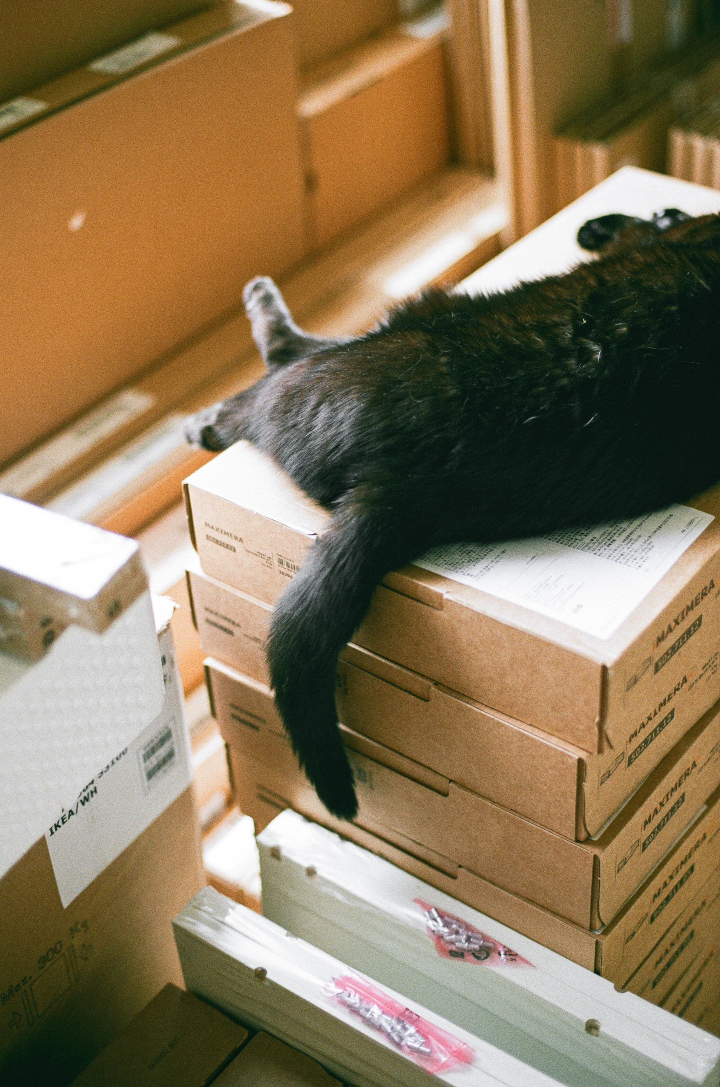 © jkblackwell_twoguineapigs_blackcats_scallywags_kitchen_fujibilmc200_canonae1_3000_5.jpg