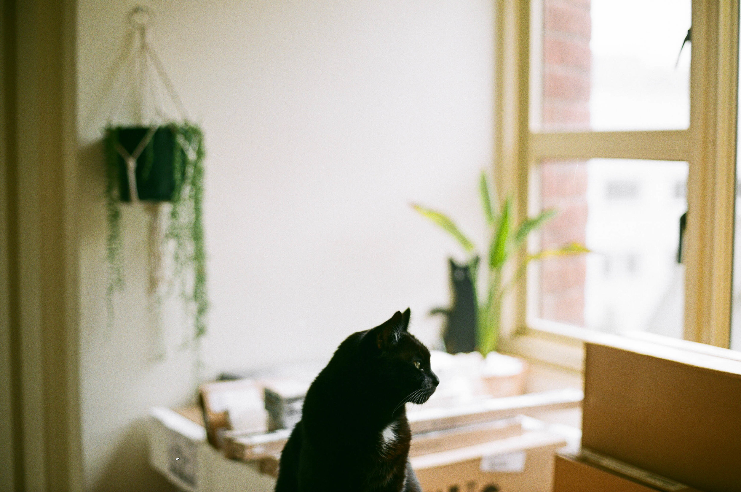 © jkblackwell_twoguineapigs_blackcats_scallywags_kitchen_fujibilmc200_canonae1_3000_3.jpg