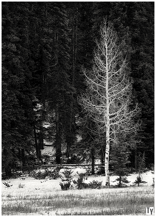 Lone Tree Utah - November 2010