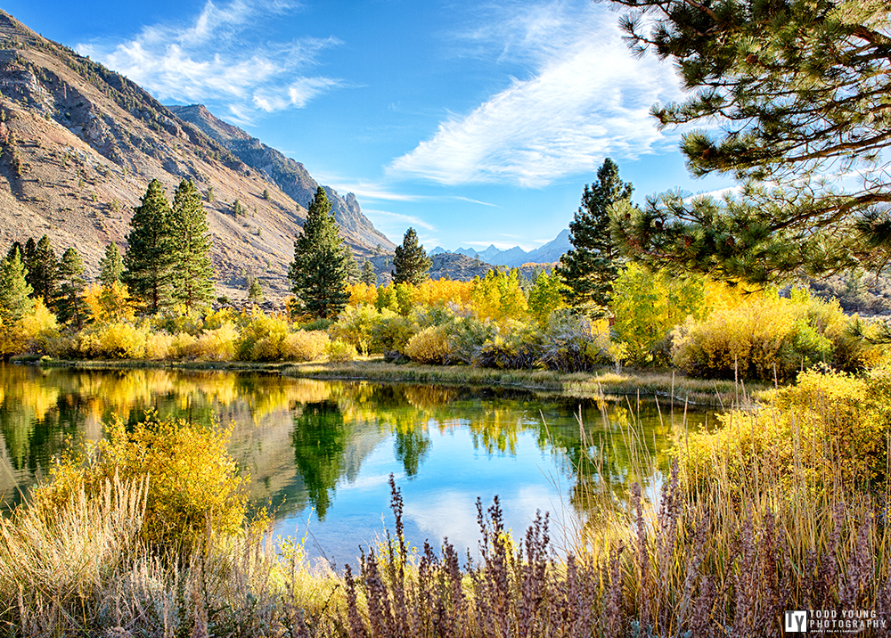 Fall Colors No.2  Eastern Sierra - October 2014