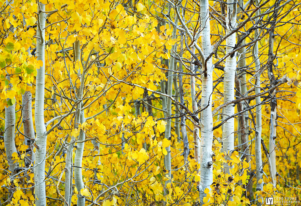 Fall Colors No.3  Eastern Sierra - October 2014