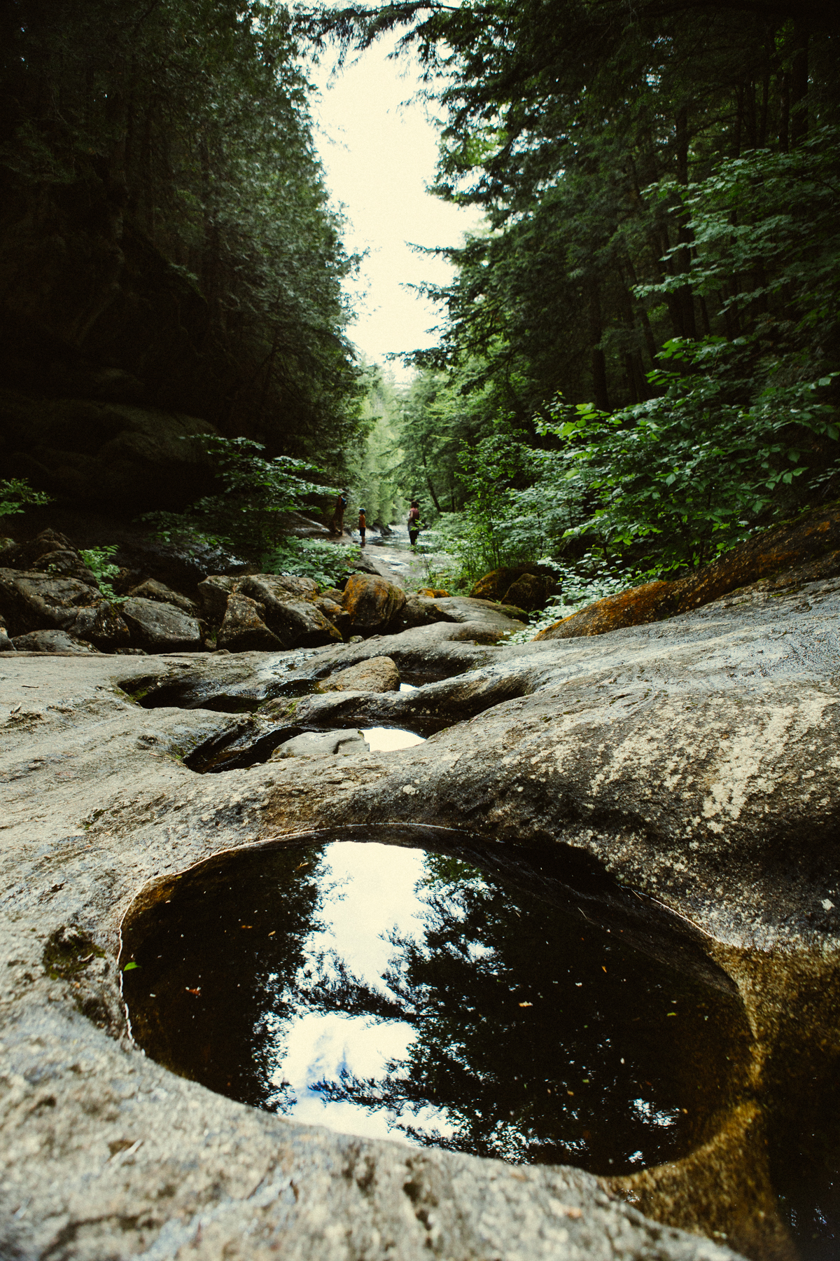 Nature Portfolio-2193.jpg