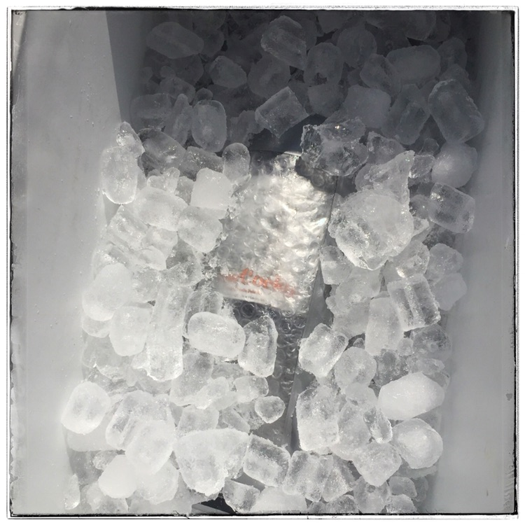 The Cooler - The bottles secured inside the protectors, sealed and iced, ready for transport to the event