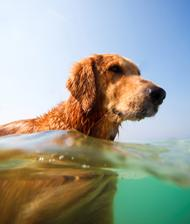 word_dog_pool_safety.jpg