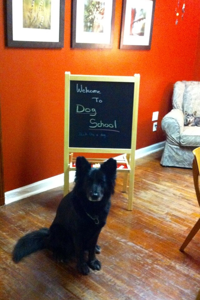 Osa welcomes you to Dog School!