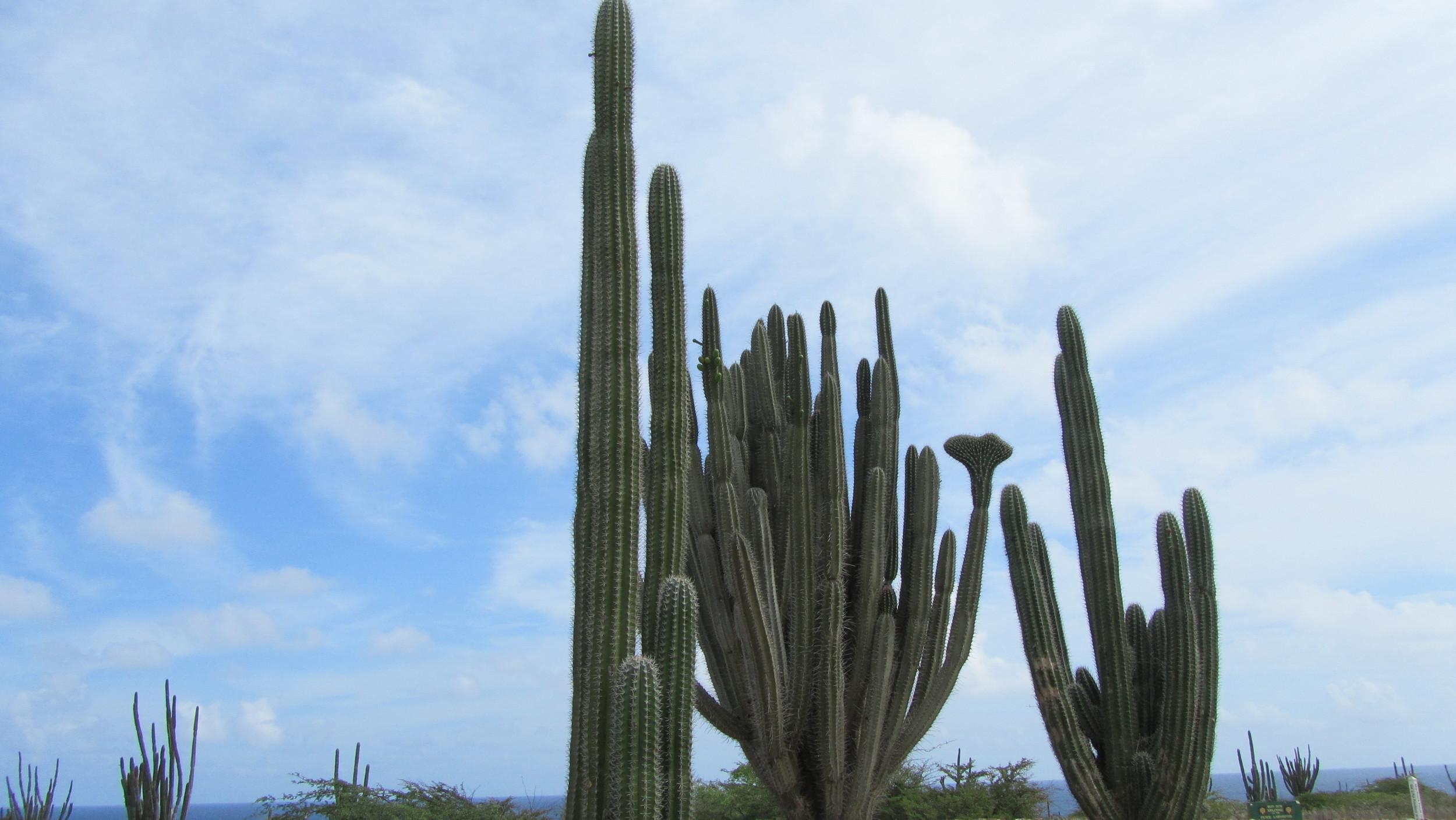 My trip to Aruba