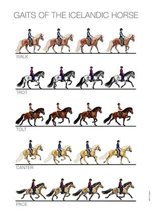 Horseplay_1.jpg