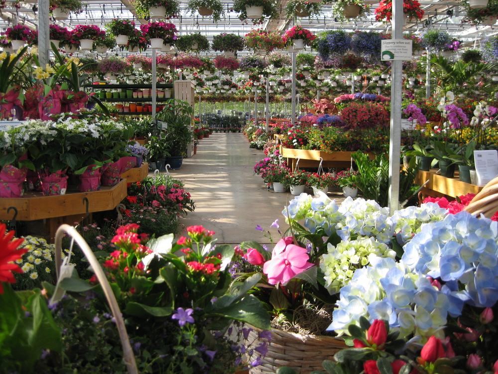 Photo Gallery At Blooms Belle Mead, Blooms Garden Center