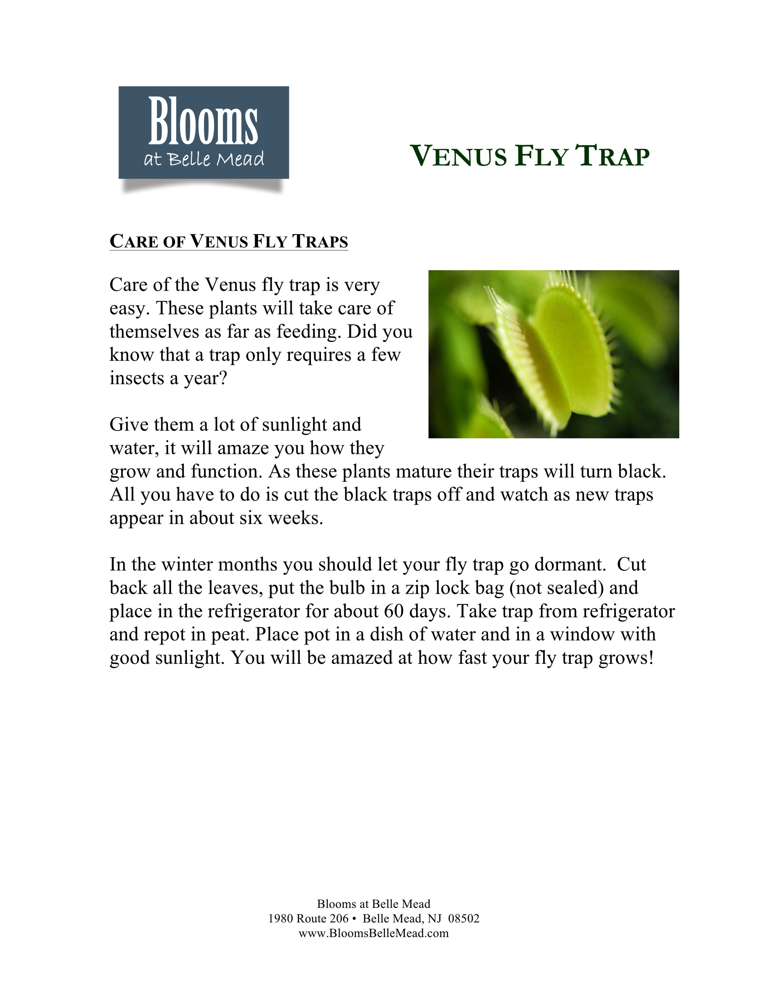 VENUS FLY TRAP CARE